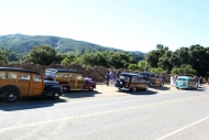 santa cruz woodies cruise 1 (1)