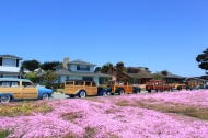 2011-spring-cruise-6